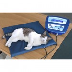 Cat_magnetotherapy
