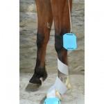 freedol_ horse_leg