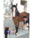 horse-ultrasound-therapy
