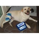 magnetotherapy-dog-MXPRO 2