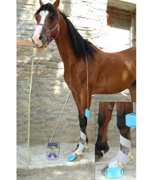 magnetotherapy_horse