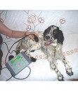veterinary-ultrasound-therapy-devices